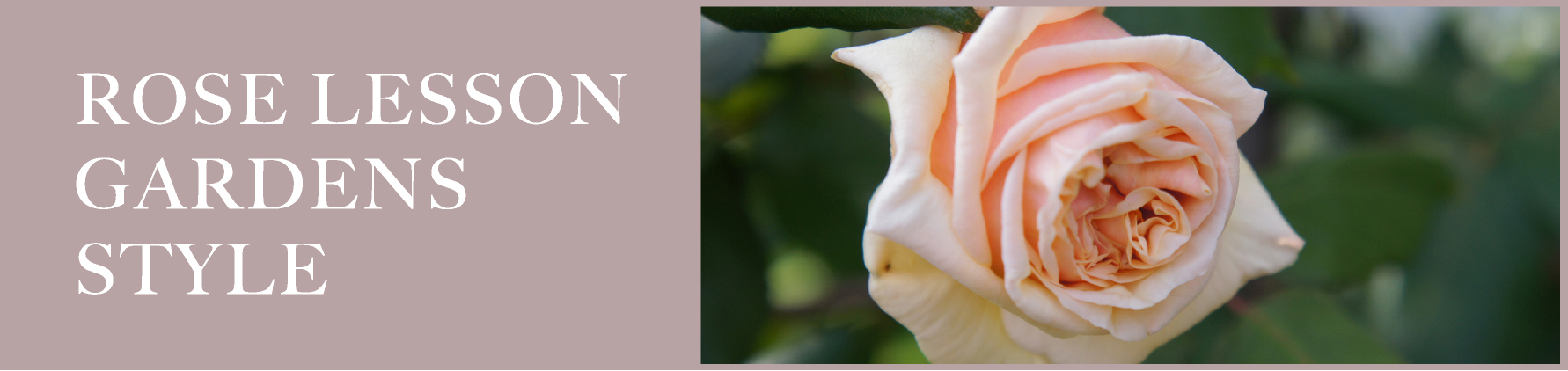 ROSE LESSON in GARDENS STYLE