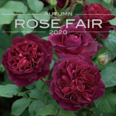 AUTUMN ROSE FAIR10/12(土)~