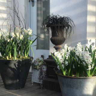 春のしあわせの香り
