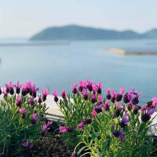 海辺の屋上ガーデン