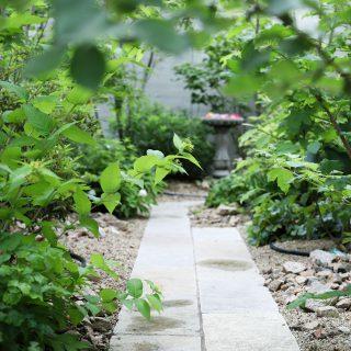 ファミリーガーデンの北庭